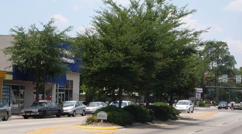 University Ave. Medians